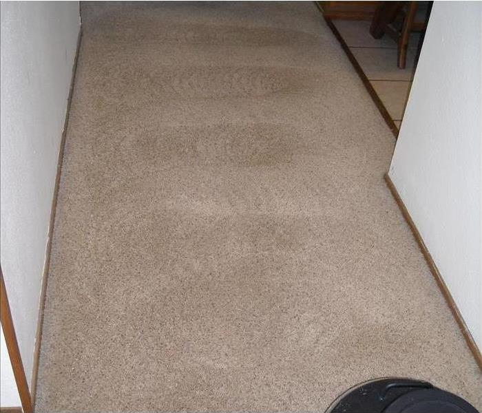 Carpet cleaning! After